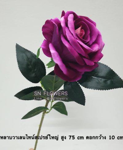 ดอกไม้สีม่วงมีข้อมูล_๑๙๐๕๑๙_0010