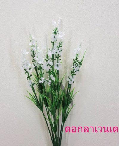 ดอกไม้สีขาว_๑๙๐๗๒๔_0100